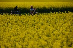 Through The Fields (*Vasek*) Tags: czech moravia europe fields yellow agriculture rapeseed nikon d7100 kids motorbike