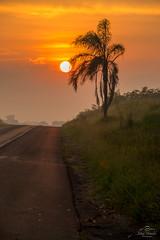 IMG_S2-7424 (Max Hendel) Tags: sunrise nascerdosol sun sol amanhecer morning amanhecendo bymaxhendel bymaxhendelphotography pormaxhendel maxhendelphotography maxhendelphotostream rodoviasp225pirassunungaspbrasil beautifulsunrise highwaysp225pirassunungaspbrazil sky