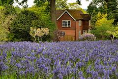 Garden House (Croydon Clicker) Tags: house garden blue tree flowers carpet wisley surrey rhs
