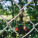 Two dried up cherries stuck on a wire fence