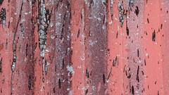 abstract (jtr27) Tags: dscf5123xl2 jtr27 fuji fujifilm fujinon xf 50mm f2 f20 rwr red abstract corrugated metal siding maine