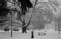 Alessandria Snow 2018 (108 108 108) Tags: alessandria neve snow pie piemonte piedmont