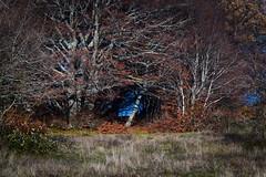Betwen the trees (Strocchi) Tags: elcito macerata trees tunnel marche appennino canon eos6d 24105mm
