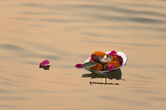 0961 Float to Eternity (Hrvoje Simich - gaZZda) Tags: water reflection candle flower petal religion floating india hrvojesimich nikond750 nikon sigma150500563 gazzda ganges varanasi asia