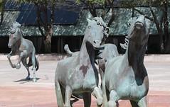 Group (zeesstof) Tags: zeesstof businesstrip timeoff irving texas lascolinas themustangsoflascolinas bronzesculpture dallassuburbs