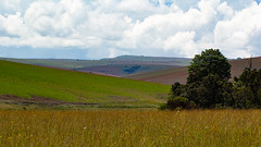 Nyika (zimbart) Tags: malawi nyikaplateau africa landscape