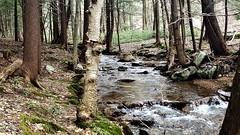 Moose Creek   20190408_134030 (PRS North Star) Tags: streams mountainstreams fishingstreams pristine moosecreek waterfalls