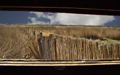 Mirando las Tablas (Rabadán Fotho) Tags: fotografia foto hdr hierba photo paisaje panoramica photographer landscape daimiel lagunas spain españa