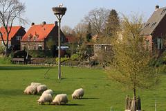 West-Betuwe: blossom time (H. Bos) Tags: beesd betuwe westbetuwe lingeroute bloesem blossom voorjaar spring holland typischhollands