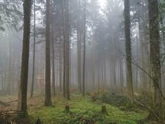 IMG_20190415_093348 (eduard43) Tags: tannenwald wald forest nebel fog rafz 2019