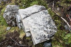 Väldigt ådrigt (Alenius) Tags: abisko sverige sweden nature natur norrland lappland lapponia fjäll fjällen