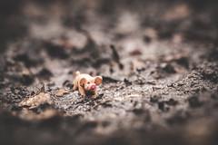 105/365 - Pig In Mud