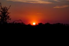 Sunset (Péter Vida) Tags: natural wesen wood baum woods wald scenery panorama sky himmel sunset sonnenuntertag sun sonne természet fa erdő tájkép ég naplemente nap photo photography