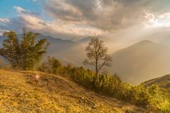 _Y2U1118.0214.Ngải Thầu.Bát Xát.Lào Cai (hoanglongphoto) Tags: asia asian vietnam northvietnam northeastvietnam northernvietnam landscape scenery vietnamlandscape vietnamscenery nature theforest forest bambo flankshill hillside sky bluessky clouds afternoon sunny sunshine afternoonsunshine canon canoneos1dx đôngbắc làocai bátxát ngảithầu phongcảnh thiênnhiên buổichiều nắng nắngchiều rừng sườnđồi bầutrời bầutrờixanh mây câytre zeissdistagont3518ze flanksmountain sườnnúi mountain núi mountainouslandscapeinvietnam ray rays sunray tree cây