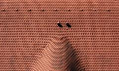 Abstract Roof Structure (nagyistvan8) Tags: nagyistván fülek felvidék szlovákia slovakia slovensko magyar nagyistvan8 tetőfedő roof rooftile cserép tetőszerkezet roofing surface texture pattern alak alakzat form forma formation tile absztrakt abstract háttérkép background csíkos csík stripe striped vonalak utazás traveling ngc colors színek fekete fehér grey szürke black white piros red extreme special különleges tárgy object épület építészet architect architecture szerkezet struktúra structure construction minimal minta sample model részlet detail bebekpanzió 2019 nikon