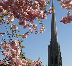 St Walburge's spire in Spring (Tony Worrall) Tags: preston prestonian st walburge church spire blossom pink northwest lancashire lancs nice beauty scene outline natural thanks nature english sell sale bought item stock buy ilobsterit instagram scenic iconic tall lovely great location visit tourist trees outside grow plant color colourful