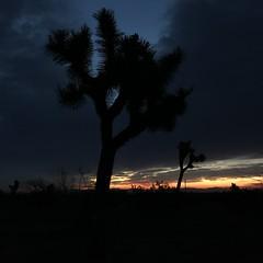 early bird (mennyj) Tags: westcoast nv nevada ca california 104 410 vacation desert mountain spring 2019 mobile iphone iphone7 celebrate