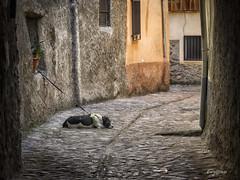Pensando. (Thinking) (Capuchinox) Tags: perro dog hervas caceres spain hdr rustico rustic pueblo olympus ventana window