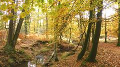 New Forest NP, Hampshire, UK (east med wanderer) Tags: england hampshire uk newforestnationalpark nationalpark highlandwater stream lyndhurst autumn oak beech bracken
