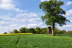 Que la campagne est belle (Croc'odile67) Tags: nikon d3300 sigma contemporary 18200dcoshsmc paysage landscape arbre tree campagne champ ciel cloud sky nature nuage colza