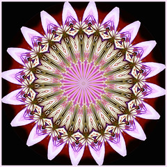 Pastel moods...a child's play (LotusMoon Photography) Tags: digitalart photomanipulation filterforge filters digital creative pink spring kaleidoscope pastel flowers manipulated square mandala abstract annasheradon lotusmoonphotography