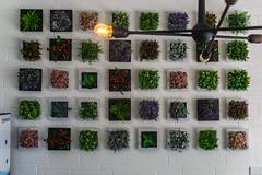 Flower Wall-1 (latinkidd98) Tags: flower wall artsy square plant plants sony alpha a6000 6000 30 30mm 50 50mm sigma 14 18 f14 f18