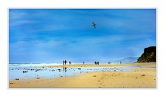 Hello, Sunday! (Christina's World!) Tags: bird beach brightcolors blue artistic creative california colorful candid dramatic digitalpainting delmar exhibitionoftalent flying frame friends gold impressionism impressionistic kurtpeiser sky landscape light largebird mood memories morning morninglight moody nature neighborhood nostalgia outdoors outdoor painterly people romantic realpeople sandiego scenic streetphotography sea seaside serene seashore pelican textures unitedstates usa vintage vividcolors view vacation water waves waterscene walking topaz topchoice opticalexcellence
