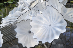 Chihuly Reflections on Nature - 72 - Ethereal White Persian Pond (Mac Spud) Tags: london nikon z6 kew gardens chihuly reflectionsonnature art sculpture glass park plants