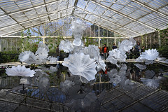 Chihuly Reflections on Nature - 62 - Ethereal White Persian Pond (Mac Spud) Tags: london nikon z6 kew gardens chihuly reflectionsonnature art sculpture glass park plants