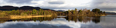 Loch o' the Lowes Dunkeld 29 Dec 2016-0000.jpg (JamesPDeans.co.uk) Tags: view forthemanwhohaseverything landscape nature reflection lochothelowes panorama dunkeld unitedkingdom perthshire scotland swt britain greatbritain naturereserve wwwjamespdeanscouk gb printsforsale europe landscapeforwalls jamespdeansphotography uk digitaldownloadsforlicence
