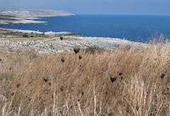 P1000997 (sara_babusci) Tags: puglia italia italy summer estate south sud sea mare view vista panorama landscape torreminervino coast coastline costa sarababusci