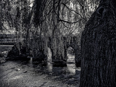 Waiting by the Bridge (iainmerchant) Tags: art artoflife iainmerchant photography theartoflife thinkingoutloud thoughtprovoking wandering panasonic picoftheday photooftheday places anstey packhorsebridge water waterscapes waterscape leicestershire landscape landscapes leicestershireuk lumix leicester gx8 midlands mirrorless bradgate monochrome