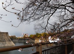 20190401_173540-P1430861 (dudegeoff) Tags: osaka japan 2019 april osakacastle 20190323b0401bkixosakacastle cherryblossoms moat flowers