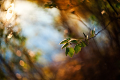 Leafs (Pásztor András) Tags: d5100 dslr nikon andras pasztor photography helios russian lens m42 44m2 bokeh swirl sun light water forest leaf red orange blue green colors