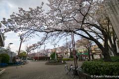 Arakawa Yuen Mae (takashi_matsumura) Tags: arakawa yuen mae arakawaku tokyo japan ngc nikon d5300 sakura cherry blossoms 桜 荒川遊園前 荒川区 東京 afp dx nikkor 1020mm f4556g vr