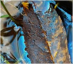 redit / ([JBR]) Tags: eau water agua bleu blue azul naturaleza nature natura feuille hoja leave deadleave feuillemorte reflet reflect reflejo pentax k5ii gard cevennes 555 2018 jbrphotography jbrphoto luz light lumiere couleur colour colores colours