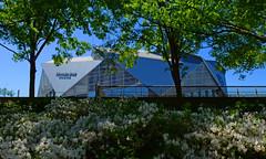 Mercedes Benz Stadium (davidwilliamreed) Tags: mercedes benz stadium trees azaleas atlantaga fultoncounty