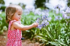 purple blossoms in the summer sun (corinnevelez) Tags: kodakportra400 canoneos3 film 135 50mmf14 dolepineappleplantation oahu hawaii island paradise toddler 21months flower bloom purple sunlight summer may2017