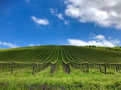 May (Liu') Tags: italy lombardia splendid'oltrepo landscape oltrepopavese vineyards outdoor maggio oltrepo