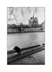 Notre Dame - 2010 (Punkrocker*) Tags: leica m2 summaron 35mm 353 5 film kodak trix 400 nb bnw bwfp monochrome notredame cathédrale lovers river seine paris street city people france