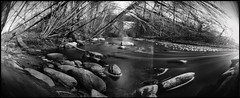 Šešuva (batuda) Tags: panorama wide 180 can coffee coffeecan elliptical pinhole stenope lochkamera analog analogue 9x21 ilford ilfospeed d76 11 9950 bw landscape river water flow stones forest wood tree trees branches spring april 2019 obscura