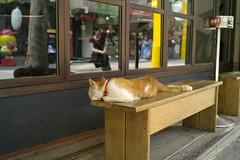 Urban camouflage (streetravioli) Tags: street photography taipei taiwan cat sleeping