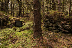 Incongruous (Click And Pray) Tags: managedbyclickandpraysflickrmanagr locheck argyll scotland growing tree green nature stone nopeople structure old ruin rural croft unusual tv incongruous moss forest wood locheckargyllscotland