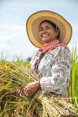 Heifer Cambodia-026 (Heifer International) Tags: 2018 cambodia harvest rice