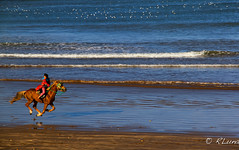 EL YADIDA (RLuna (Instagram @rluna1982)) Tags: africa marruecos cultura viaje vacaciones rluna rluna1982 nature photography canon naturaleza instagram flickr spotlight sahara instagramapp igers igersmadrid caballo jinete elyadida