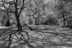 Quiet Zone (Joe Josephs: 3,166,284 views - thank you) Tags: centralpark trees woods urbanpark urbanexploration citypark quietplace tranquil manhattan nyc newyorkcity outdoorphotography landscape landscapephotography vacationphotography travelphotography travel newyorkcityphotography newyorkcitytravel bw blackandwhite monochrome