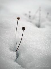 (Pablev) Tags: olympus omd em5 1240 asturias friohieloynieve nieve snow mark2 zuiko