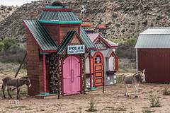 reindeer school for mules (gvbtom) Tags: verdecanyonrailroad arizona christmas reindeer scenic wildmules