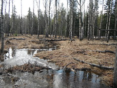 Woodlands Spring Run Off (Mr. Happy Face - Peace :)) Tags: spring alberta foothills nature hiking canada trees forest floor art2019