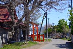 A local shrine (しまむー) Tags: fujifilm xe2 ebc fujinon 55mm f18 velvia yokohama kabushima 横浜 蕪島 八戸 蕪島神社 菜の花